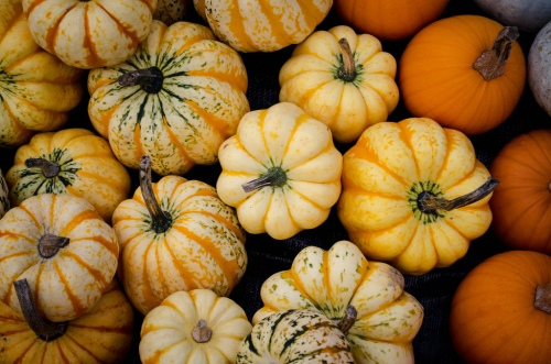 Pumpkin Selection by Jenny (Flickr)